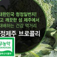 친환경 브로콜리 1.5kg/3kg/5kg